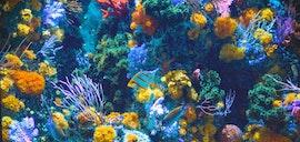 Aquarium Cams