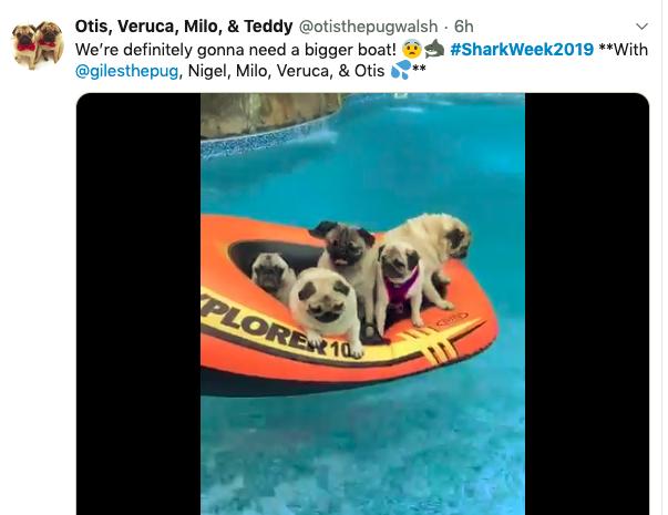 Shark Week on Twitter